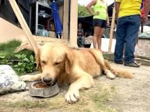Él es Rocky, el perro de la familia que ha pasado asustado toda la semana.